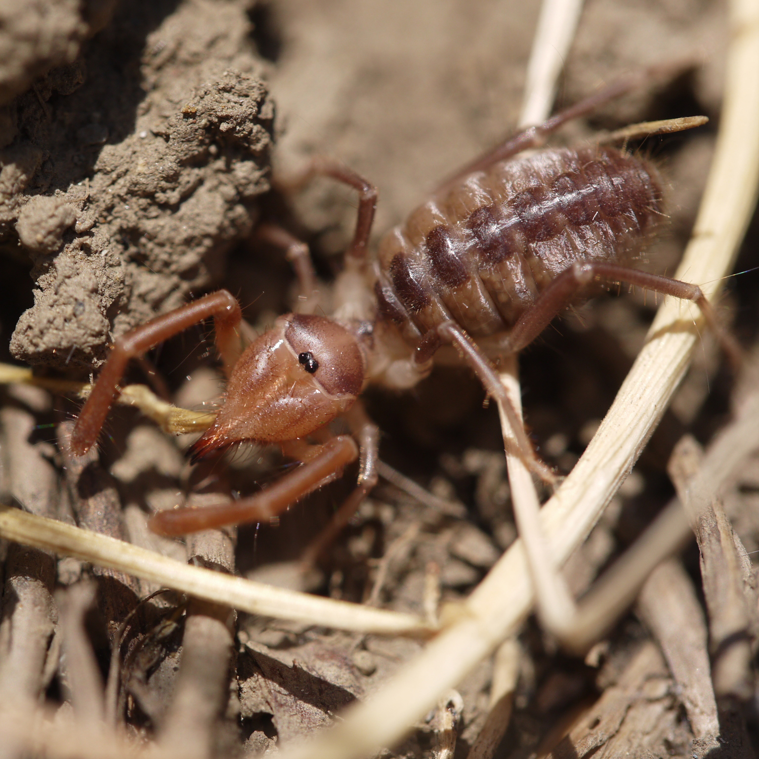 windscorpion